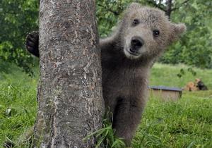 Бурый медвежонок поселился в словенской семье
