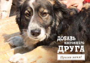 На Facebook зарегистрировались собаки