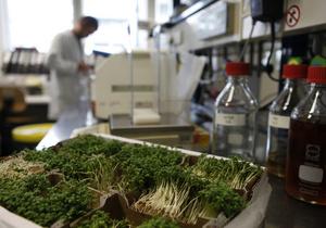 Источником кишечной инфекции в Германии оказались семена бобовых