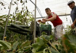 Главный санитарный врач РФ: ЕС пытается диктовать России свою волю по проблеме овощей