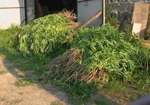 В селе на Прикарпатье в четвертый раз за полгода обнаружили крупную партию конопли