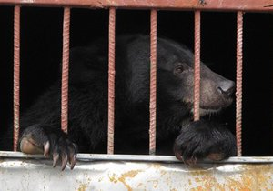 В Винницкой области Госэкоинспекция закрыла незаконный передвижной зоопарк