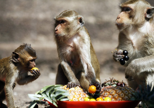 В США представили первую рекламу для обезьян