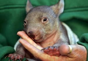 В Австралии нашли останки древнего животного весом три тонны