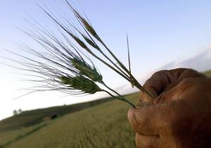 Дело: Евросоюз увеличил импорт зерна в десять раз