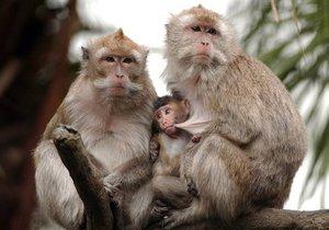 Обнаружен смертельно опасный вирус пневмонии, который передается от обезьян человеку