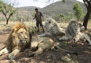 Ученые установили, что львы чаще нападают на людей после полнолуния