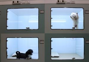 В Южной Корее вывели светящуюся собаку