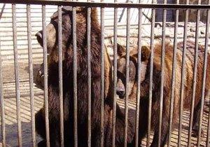 Власти свезут на Синевир всех медведей, которых содержат в ресторанах и