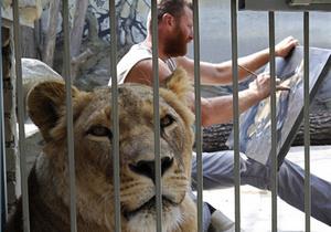 Фотогалерея: Сообразил на троих. Украинец поселился в клетке с двумя львами