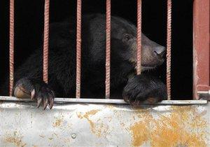 В Санкт-Петербурге в гараже заперли двух бурых медведей