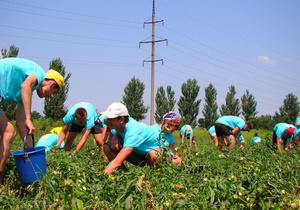 На полях Николаевской области начали работать студенческие трудотряды