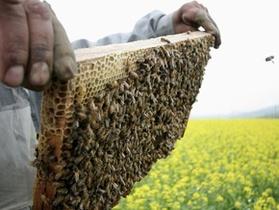 В прошлом году в Украине собрали почти 70 тысяч тонн меда. Больше всего - в Донецкой области