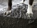 Киевляне сообщают о новых случаях отравления бездомных собак