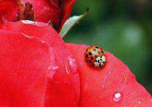 Евросоюз исследует пищевую ценность насекомых с целью борьбы с голодом