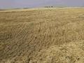Украина планирует увеличить экспорт зерна вдвое