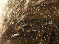В Италии произошел взрыв на фабрике фейерверков. Погибли пять человек