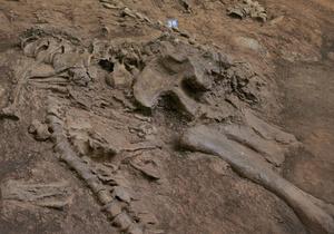 Ураган помог американским ученым обнаружить останки динозавра