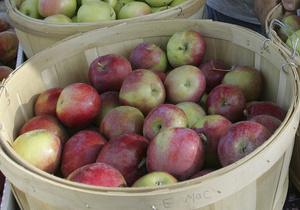 Украина выходит на четвертое место в мире по производству яблок