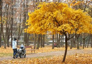 В Украине в начале следующей недели ожидаются первые заморозки