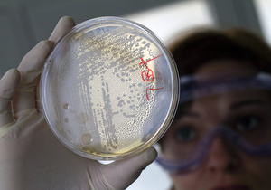 Американские биологи зашифровали текст с помощью кишечной палочки