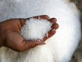 В новом сезоне Украина увеличила производство сахара на 35%