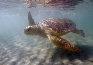 Индийский океан оказался самым опасным местом для морских черепах