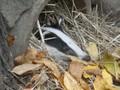 В Киевском зоопарке барсук сбежал в клетку к кунице