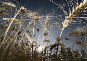 Корреспондент: Битва за урожай. В борьбе украинского правительства и украинских экспортеров за доходы от экспорта зерна выиграла Россия