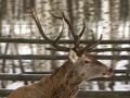 Отравления животных в киевском зоопарке: Самка оленя при смерти