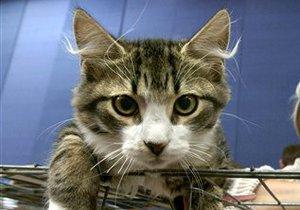 В Канаде открыли первое кошачье кафе