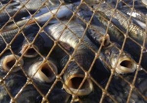 В Луганской области борцы с браконьерами передали детской больнице 105 кг рыбы