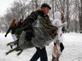Новогоднюю елку в Киеве можно будет купить за 40 грн