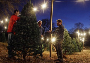 Опрос: Почти половина украинцев собирается установить дома живую елку