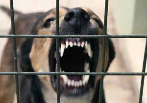 В Одессе бродячие собаки загрызли бомжа