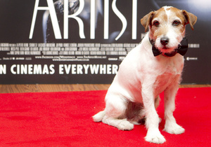 Соведущим церемонии Оскар станет пес Угги