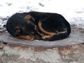 В Подольском районе Киева десятки домов остались без воды