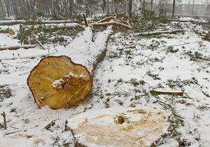 Москаль обеспокоен вырубкой деревьев в Киеве