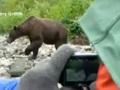 На Аляске туристы удивили медведя гризли, никак не отреагировав на его атаку