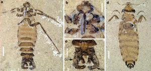 У Китаї виявили рештки гігантської блохи Юрського періоду