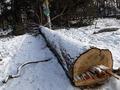 Прокуратура возбудила дело по факту вырубки более 270 деревьев в Голосеевском районе Киева