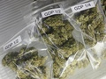 Израиль признан лидером по использованию марихуаны в медицине