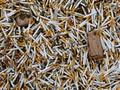 В Украину стали больше везти табачной контрабанды, чем вывозить из нее – Гостаможня