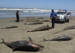 Дельфины погибли из-за техногенной деятельности человека