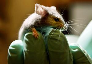 В США двое наркоманов угнали грузовик с мышами