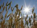 Украина в текущем сезоне увеличила экспорт зерна на 70%