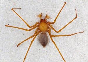 Американские ученые открыли новое семейство пауков