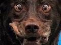 Ветеринары заявили, что в Запорожской области от сибирской язвы погибла собака