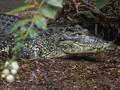 В Казахстане похищенные с выставки питон и крокодил нашлись на детской площадке