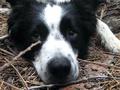 Итальянка завещала два миллиона евро своей собаке